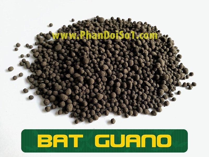hinh-anh-phan-doi-bat-guano