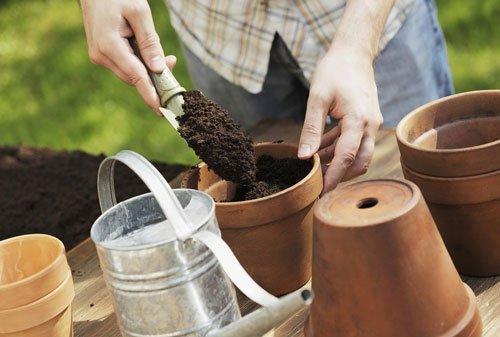 Cách bón phân dơi cho hoa lan hiệu quả nhất