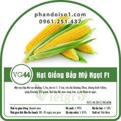 Hạt giống bắp mỹ ngọt VG44