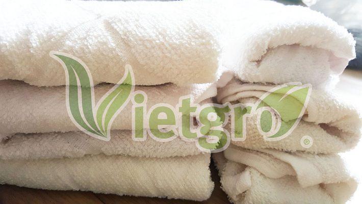 Phương pháp ngâm ủ hạt giống nảy mầm bằng khăn
