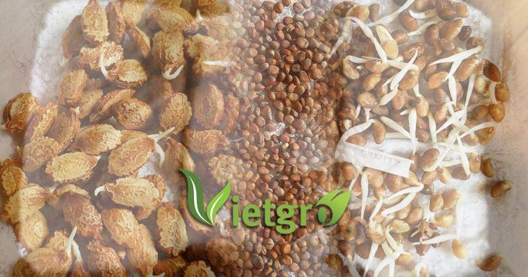 Phương pháp ngâm ủ nãy mầm hạt giống