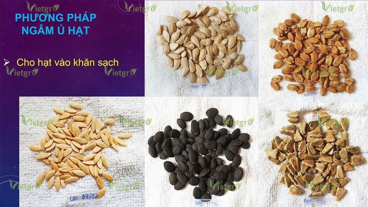 Phương pháp ngâm ủ nảy mầm hạt giống