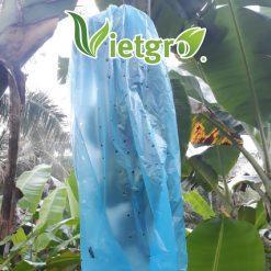 Túi bao buồng chuối (túi nylon) 70 x 140 cm