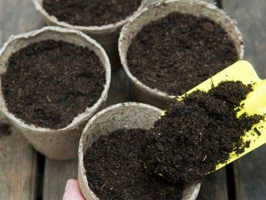 Chuẩn bị giá thể và dụng cụ trước khi trồng
