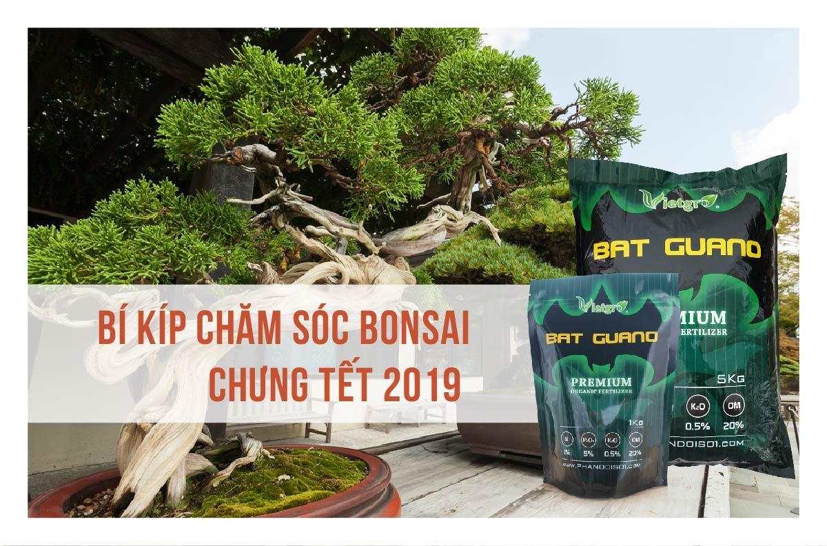Bí kíp chăm sóc Bonsai - cây cảnh chưng Tết