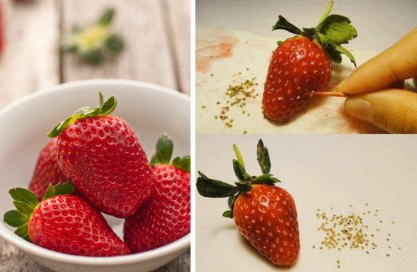 Mẹo trồng cây lấy hạt từ quả dâu tây