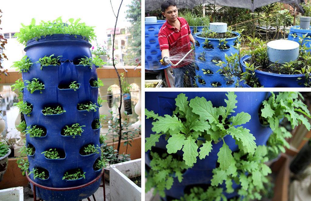 Mô hình trồng rau thông minh tại nhà