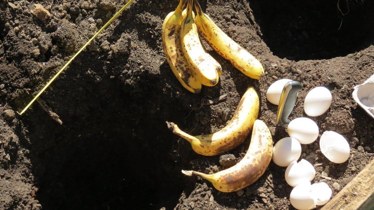 vỏ trứng và chuối bón phân